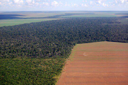 Zerstörung des Amazonas für den Anbau von Soja