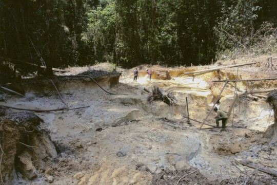 Zerstörung des Amazonas